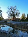 Träd reflekterat i dammet Royaltyfri Fotografi