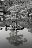 Träd reflekterat i en sjö Royaltyfria Bilder
