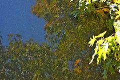 Träd reflekterat på stenen royaltyfri foto