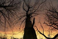Träd` s av guld Arkivfoton