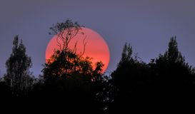 Träd silhouetted mot en solnedgång Arkivfoton