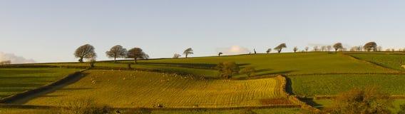 Träd silhouetted mot ett aftonljus överst av ett patchworkfältlandskap Royaltyfria Bilder