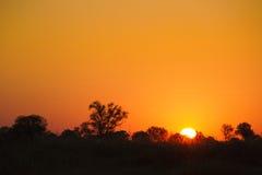 Träd silhouetted mot härlig soluppgånghimmel Royaltyfri Fotografi