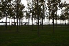 Träd silhouetted på skymning Royaltyfria Foton