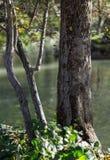 Träd Sjö Härlig sikt av naturen Fotografering för Bildbyråer