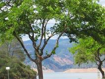 Träd sjö Oroville Arkivbilder