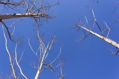 Träd slösar klimat royaltyfri fotografi