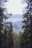 Träd, snö och skogen royaltyfria bilder