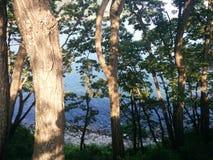 Träd, sol och hav Arkivbild