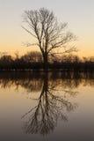 Träd solnedgång eller soluppgång för sjöreflexion Royaltyfri Foto