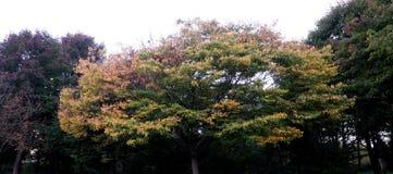 Träd som ändrar färger i vår Royaltyfri Bild