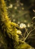 Träd som är bevuxet med mossa och en blomma Arkivbild
