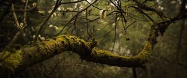 Träd som är bevuxet med mossa och och hängear Royaltyfri Foto
