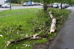 Träd som är brutet med en orkan och bilar i Moskva Royaltyfri Foto