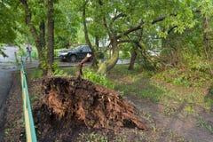 Träd som är brutet vid en orkan, en kvinna och en bil i Moskva Arkivbilder
