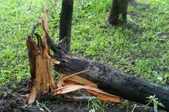Träd som är brutet vid en orkan i Moskva Royaltyfria Bilder