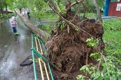 Träd som är brutet vid en orkan och en liten flicka i Moskva Royaltyfri Bild