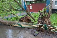 Träd som är brutna vid en orkan i Moskva Royaltyfri Bild