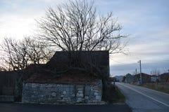 Träd som är fullvuxet upp på huset Arkivbild
