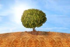 Träd som är fullvuxna från torkad sprucken jord fotografering för bildbyråer