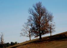 Träd som är karga av sidor under det hårda ljuset av en sen nedgångdag i New England Royaltyfri Fotografi