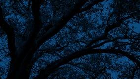 Träd som är sent på natten i brisen