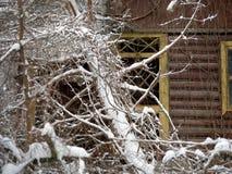 Träd som är stupat efter snöstorm royaltyfri bild