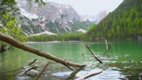Träd som är stupat i sjön arkivfilmer
