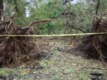Träd som avverkar dagen efter den sandiga orkanen lager videofilmer