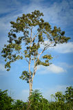 Träd som bara står i ett fält över blå himmel Arkivfoto