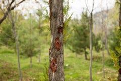 Träd som beskär höstgräsplanguling Royaltyfria Foton