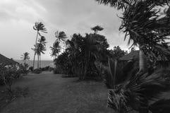 Träd som blåser nära havet på en blåsig dag som är svartvit Fotografering för Bildbyråer