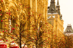 Träd som dekoreras med girlander Royaltyfria Foton