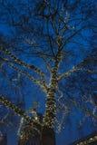 Träd som dekoreras med julljus, royaltyfria bilder