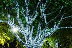 Träd som dekoreras med vita små ljus Arkivbild