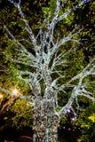 Träd som dekoreras med vita små ljus Arkivfoton