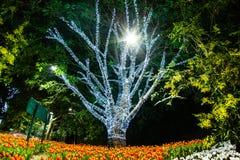 Träd som dekoreras med vita små ljus Arkivbilder