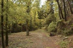 Träd som får den gula färgen av hösten arkivfoto