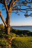 Träd som förbiser Stilla havet på skymning Royaltyfria Foton