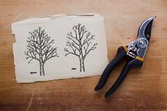Träd som före och efter beskär arkivbild