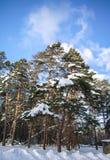 Träd som filt i snö Fotografering för Bildbyråer