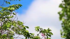 Träd som flyttar sig med vinden under dagen arkivfilmer