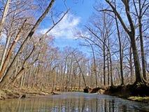 Träd som fodrar dammet Arkivfoton