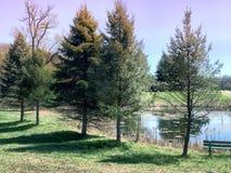 Träd som fodrar ett damm Arkivfoto