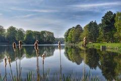 Träd som fortfarande reflekterar på a sjön Arkivbild