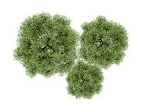 Träd som framförs som isoleras på vit Fotografering för Bildbyråer