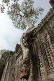 Träd som hänger över en vägg royaltyfri foto