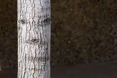 Träd som har en framsida Arkivfoto