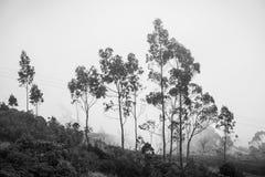 Träd som inramar dimman royaltyfri fotografi