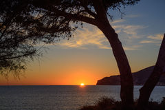 Träd som inramar solnedgång Fotografering för Bildbyråer